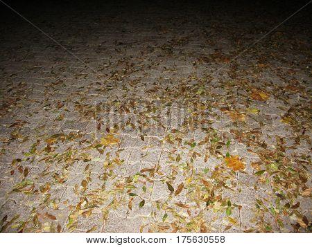 Autumn fallen leaves on the sett night photo