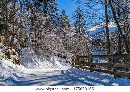 Calm Place, White Snow And Winter Trees On Ski Resort