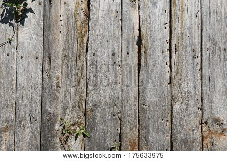 Old wood timeworn planks of a rustic door. Texture background