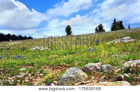 Blanket Of Wildflowers