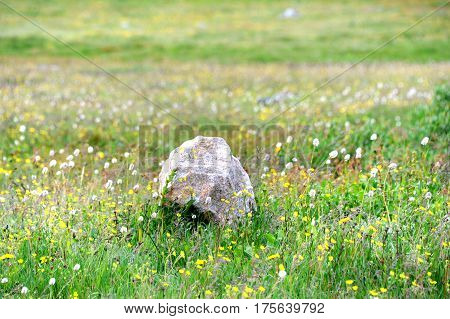 Alpine Meadow And Rock