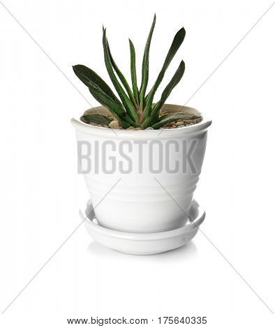Houseplant in pot isolated on white