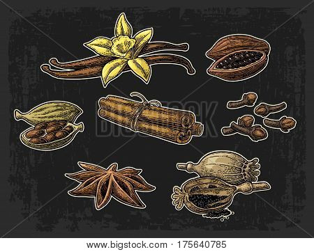 Set of spices. Anise star cardamom clove cinnamon stick fruits of cocoa beans vanilla stick and flower poppy heads and seeds. Isolated on dark background. Vector color vintage engraving illustration.
