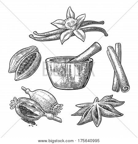 Set of Spices Mortar and Pestle. Anise star cinnamon stick fruits of cocoa beans vanilla stick and flower poppy heads and seeds. Isolated on white background. Vector black vintage engraving illustration.