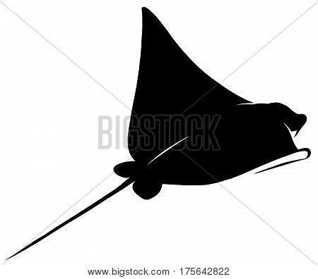 black and white linear draw Stingray illustration