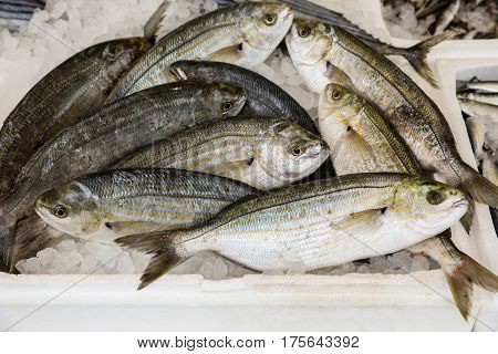 Freshly caught Sarpa salpa also called dreamfish, salema, salema porgy, cow bream or goldline, from a species of sea bream in the box on the counter at the greek fish market. Horizontal. From above.