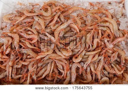 Freshly caught shrimps in the box on the counter at the fish shop. The shrimps background. Horizontal. Top view.