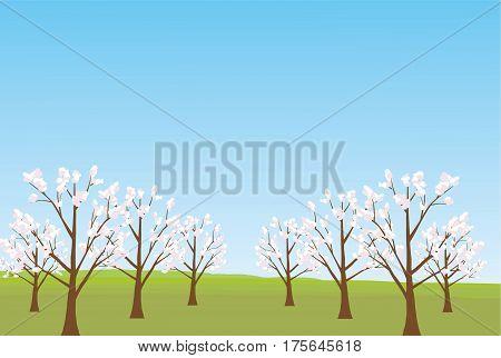 Line of cherry blossom tree background - illustration