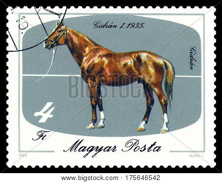 STAVROPOL RUSSIA - March 04 2017: a stamp printed by Hungary shows horse Gidran -1 1935 bicentenary of horsebreeding at Mezohegyes circa 1985