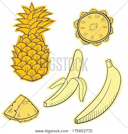 Vector illustration with juicy tropical fruits: banana and pineapple. Colored and outline drawing of fruits isolated on white.