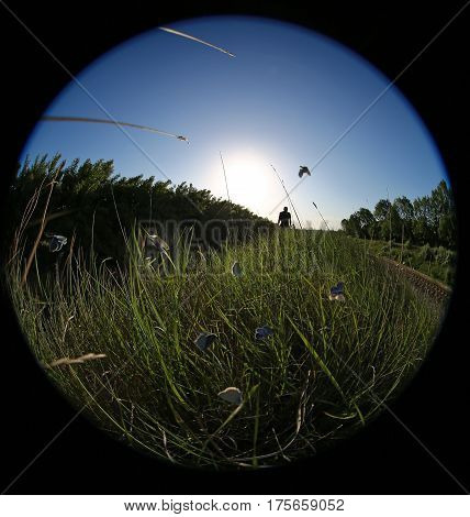 Summer meadow with butterflies and obscure figure of man in the background and the sun on the horizon. Ultra-wide angle of view.