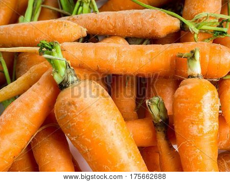 close up photo of fresh homegrown carrots