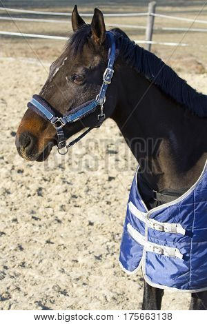 Purebred horse posing in the stable door on animal farm in blanket