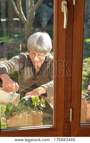 Elderly gray-headed lady European watering flowers at a garden