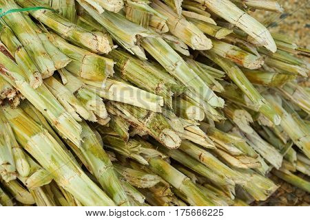 A pile of some squeezed sugar cane