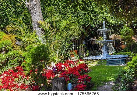Union Garden Red Poinsettias Jardin Fountain Guanajuato Mexico