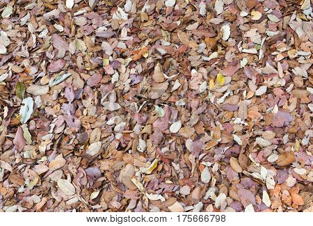 Top view of dry leaf background for design and decoration