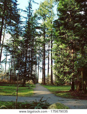 Pathways Through Lush Spring Forest