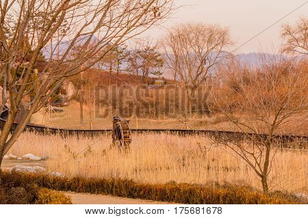 Wooden water wheel in a city woodland park surrounded by tall winter wheat with a wooden fence and trees in both the foreground and background