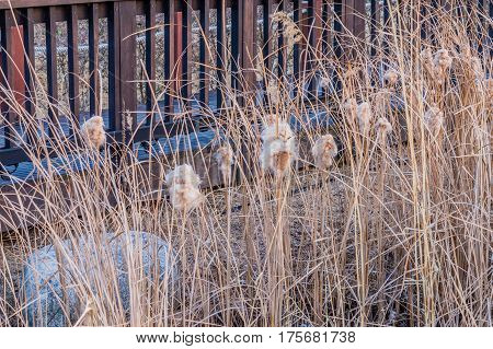 Cat-of-nine-tails surrounded by tall brown grass in front of wooden fence