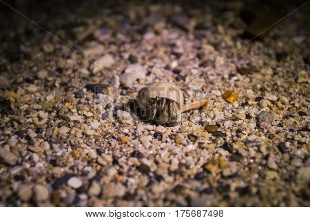 Small Crab On A Beach