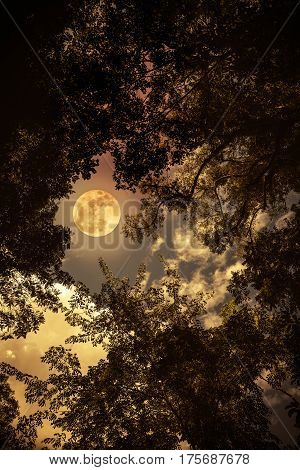 Silhouette the branches of trees against night sky with full moon on tranquil nature. Beautiful landscape with full moon outdoors at night. Sepia tone. The moon were NOT furnished by NASA.