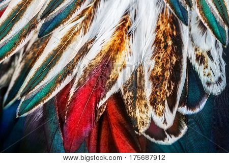 Bright brown feathers of some bird close up
