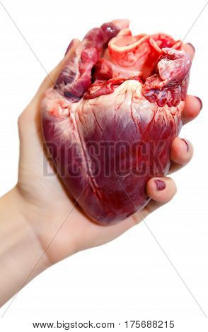 Raw pork heart in a woman hand