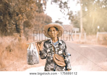UBOB RATCHATANI,THAILAND,JANUARY 16,2017 : Unidentified Grandmother walked on the way to return the tails. On this route on a daily basis.