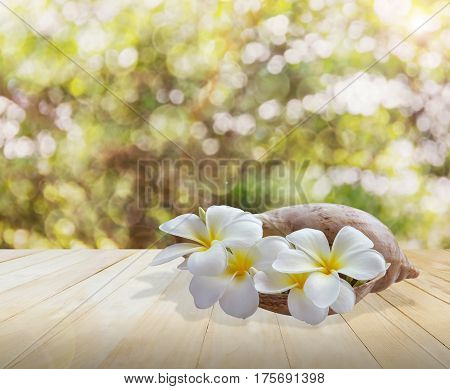 Frangipani Or Plumeria Flower In Sea Conch Shell On Jointed Wood Table