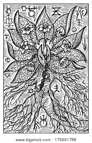 Mandragora, mandrake, magic root. Hand drawn vector illustration. Engraved line art drawing, black and white doodle. See all fantasy collection in my portfolio set