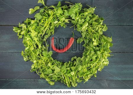 A wreath of cilantro leaves with a red hot chili pepper inside, shot from above on a dark wooden background texture with a place for text