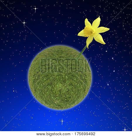 Single daffodil grows from a small planet of grass with a starry sky behind.