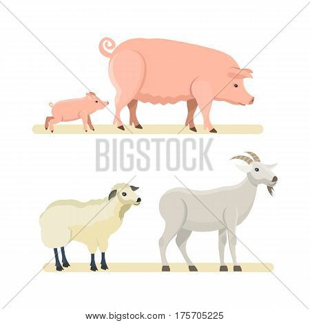 Farm animals concept. Cute funny white sheep, goat, pink pig isolated on white background. Cartoon vector illustration isolated