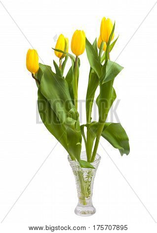 Bouquet of tulips (Tulipa fosteriana) on a white background. Bouquet in a crystal vase. The symbol of spring.