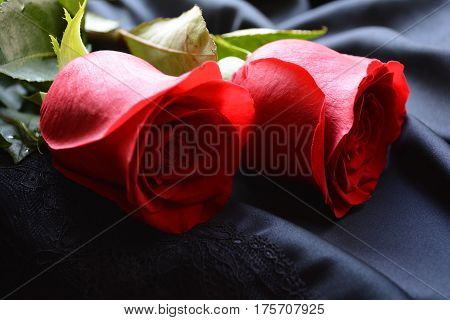 two red roses on a black background