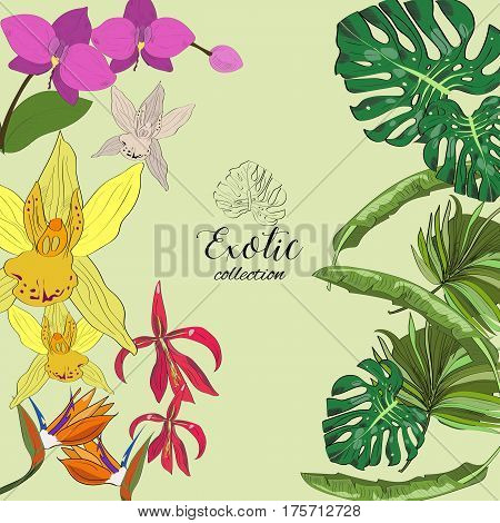 Exotic Collection Of Hand Drawn Tropic Leaves And Flowers.