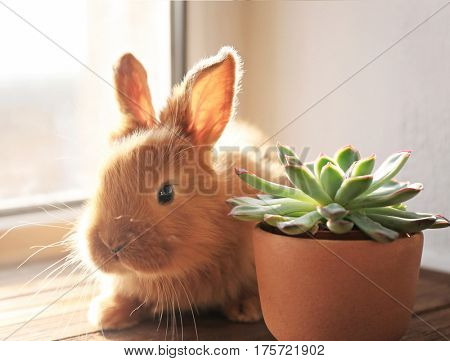 Cute funny rabbit on window sill in sunny day