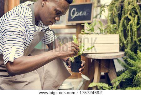 Adult Man Checking Plants Outside Flower Shop