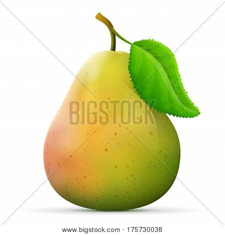Single pear fruit close up. Raw pear with leaf isolated on white background. Qualitative vector illustration about pears agriculture fruits cooking food gastronomy etc