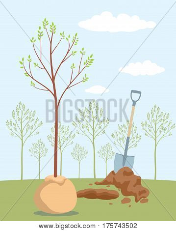 Planting tree. Save trees - day of forests. Orchard planting