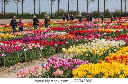 CREIL, NETHERLANDS - APRIL 16, 2014: People walking through flowerbeds with tulips in The Netherlands