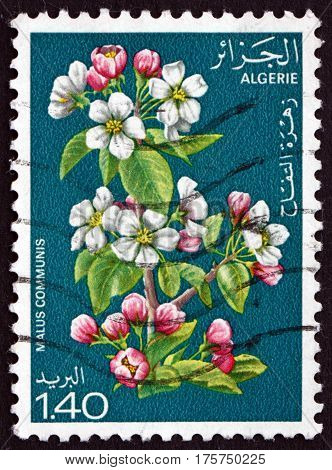ALGERIA - CIRCA 1978: a stamp printed in Algeria shows Flowers of Apple Malus Communis is a Deciduous Tree circa 1978