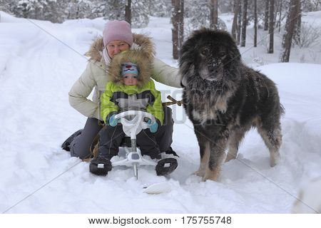 Grandmother and grandson in the winter forest. Near a large and kind Caucasian Shepherd Dog