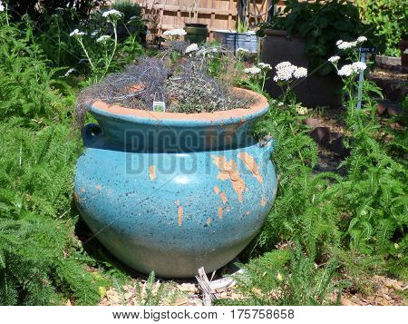 A clay outdoor flower pot in a park in Florida.