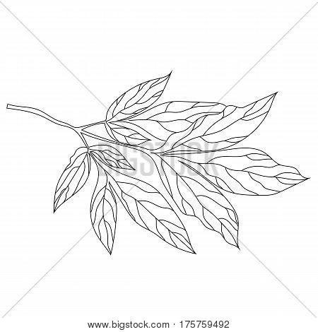 Graphical black leaves twig illustration. black leaves twig  contour leaves twig , decorative leaves twig , isolate leaves twig, monochrome leaves twig. Vector.