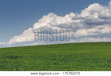 Green Wheatfield And Strom Clouds