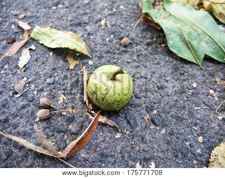 Little green apple fruit on the ground macro photo