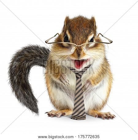 Funny animal businessman chipmunk with tie and glasses on white