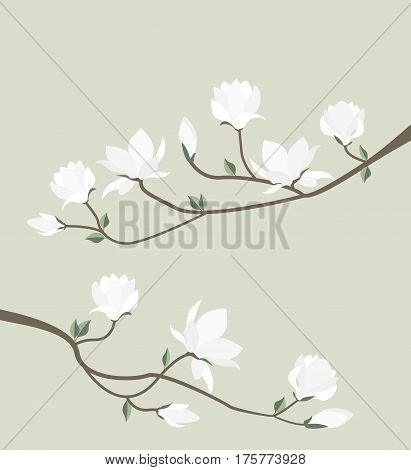 Vector illustration white flowers. Pink spring magnolia flowers branch